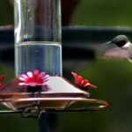 What do squirrels, hummingbirds, and astronomy have in common?