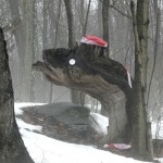 Rapid snow melt uncovers a possible Lake Pocotopaug monster amongst other items
