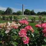 Walnut Hill Park Rose Garden