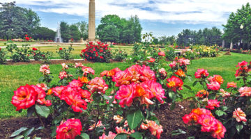 New Britain Rose Festival